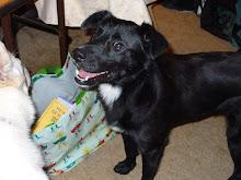 Katie -- dog #2