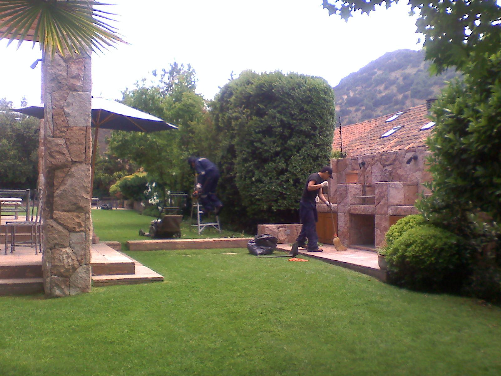 Darrigrandi y simunovic jardineria semillas o cesped alfombra - Cuando plantar cesped ...