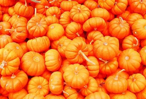 Pumpkin Scissors picture - Pumpkin Scissors Pictures - Anime