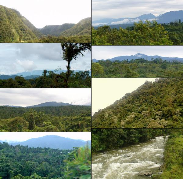 Tena [Pcia. de Napo - Región Amazónica]