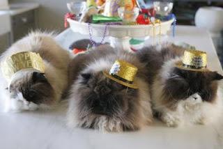 martha cats
