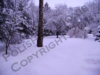 Picture of snow covered yard and trees