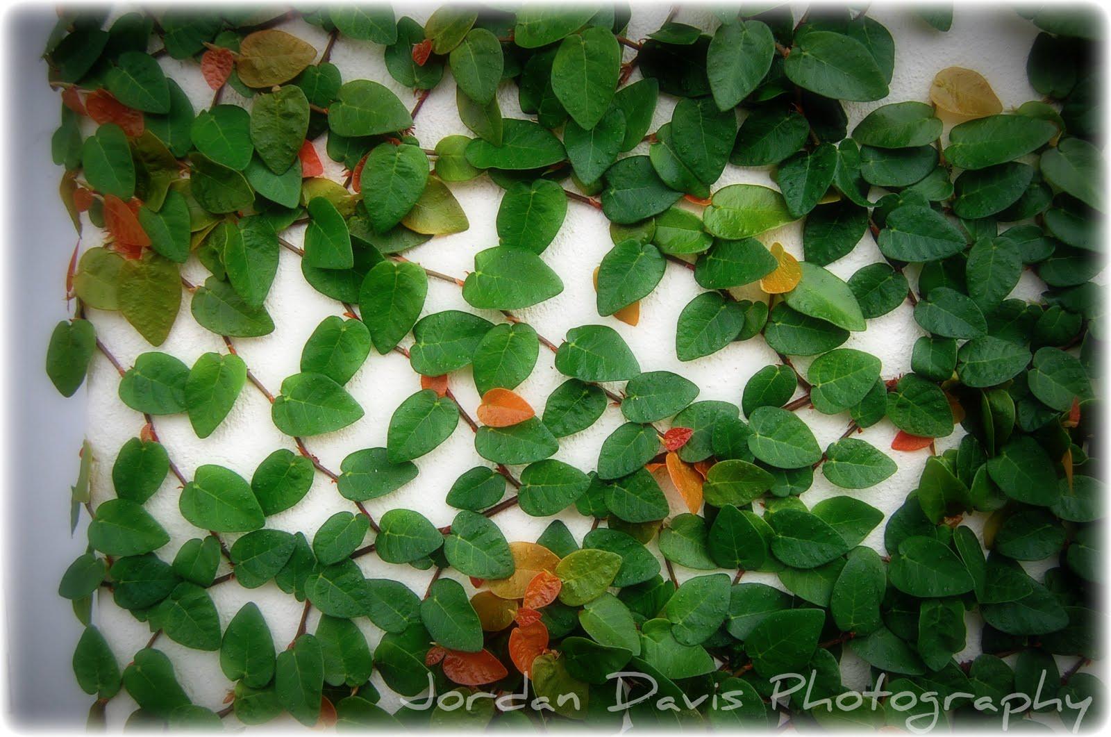 Jordan Davis Photography