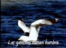 Las gaviotas tienen hambre