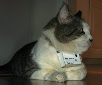 cat-cam-media-promotion-agency