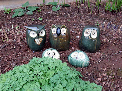 This cute family of owls was bought at the dollar store for less than 10 bucks and they are now looking after my shade garden.