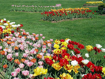 I wish that my flower beds looked this beautiful.