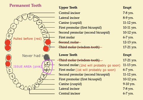 teeth diagram with labels. teeth diagram with labels.