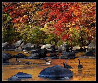 whitesnake wallpaper. Chasing cardinals, leaves arranged on a rock Wallpaper