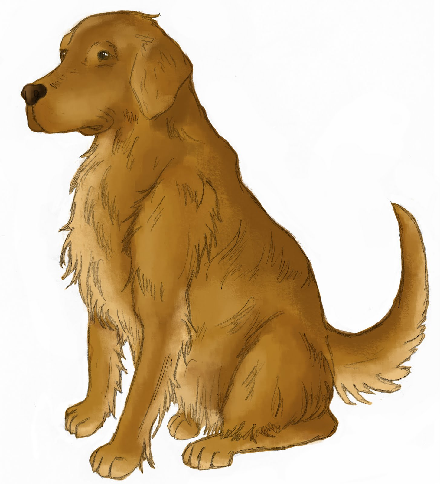 kristen acampora illustration golden retriever