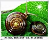30. 生命战士小蜗牛