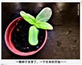 31. 绿色生命的开始