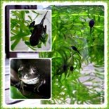 Frog Life-cycle