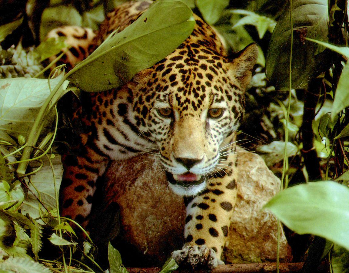 Amazon Tropical Rainforest Animals