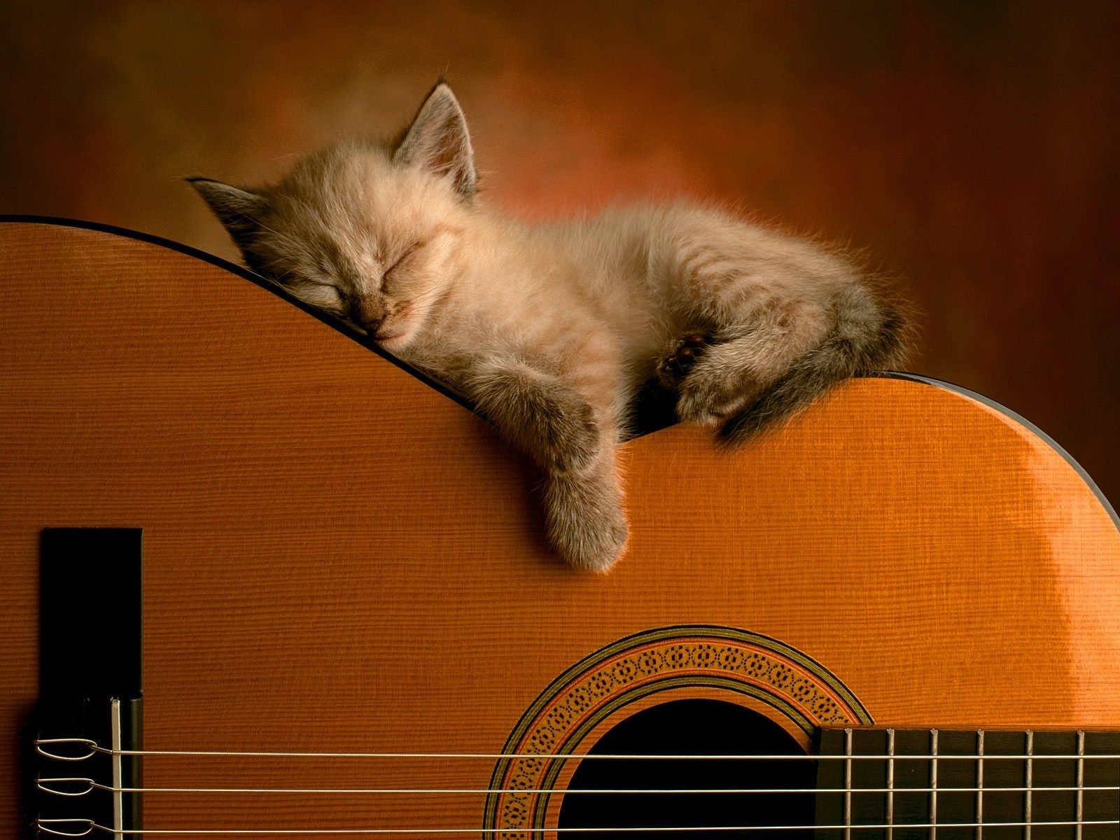 http://3.bp.blogspot.com/_E26Ndy_oKVc/TNNAxCl8msI/AAAAAAAAAM8/y4LA3ZHPQu4/s1600/Cat+sleeping+on+guitar.jpg