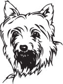 Yorkshire terrier coloring page dog coloring pages for Yorkie coloring pages