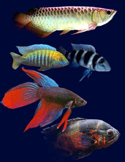 Tropical Freshwater Fish Species Tropical Fish Gallery