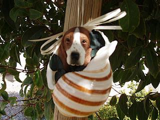 Funny Basset Hound Puppies
