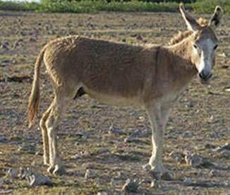 Donkey Image Gallery