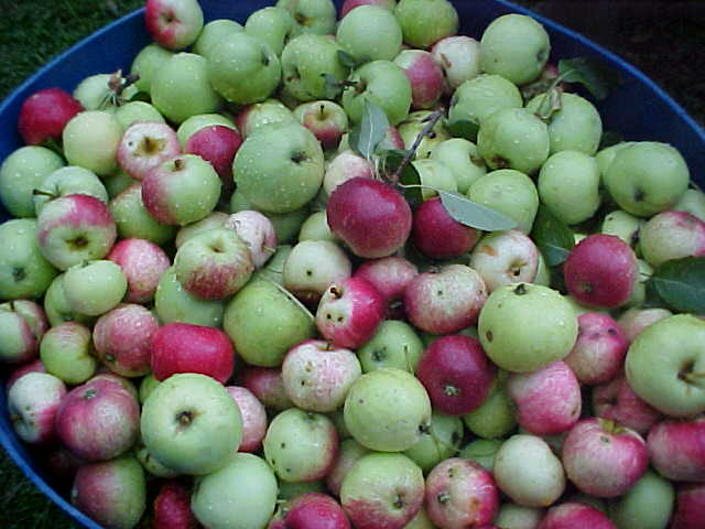 how to make homemade cider from apple juice