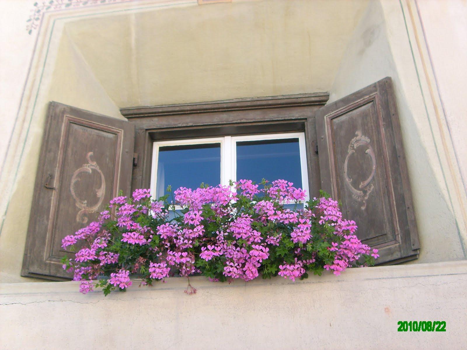#9A3193 Janela com folhas ornadas por pintura em madeira e floreira. 1592 Vidros Nas Janelas