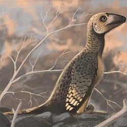 Ptáci a jejich původ, vznik peří a letu