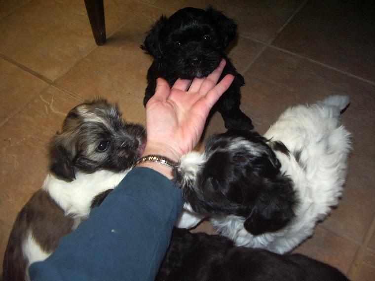 Past puppies having fun