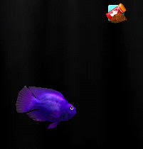 My iQuarium app virtual fish is feeling a little blue