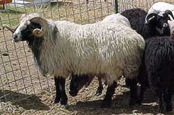 astrakhan  bukhara  persian