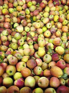 omenoita BC Fruit co-op