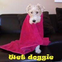 Wet Doggie