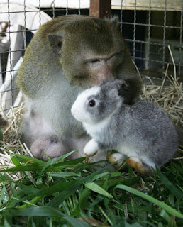 [Image: Foto+Kelinci+Bareng+Monyet.jpg]