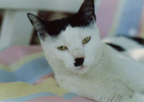 http://3.bp.blogspot.com/_E8TJXLWh7To/TS68lQDZitI/AAAAAAAAAdk/AaNgTVTo8l8/s1600/cat131.jpg