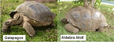 The Animal Blog: Island Gigantism  Gigantism In Animals