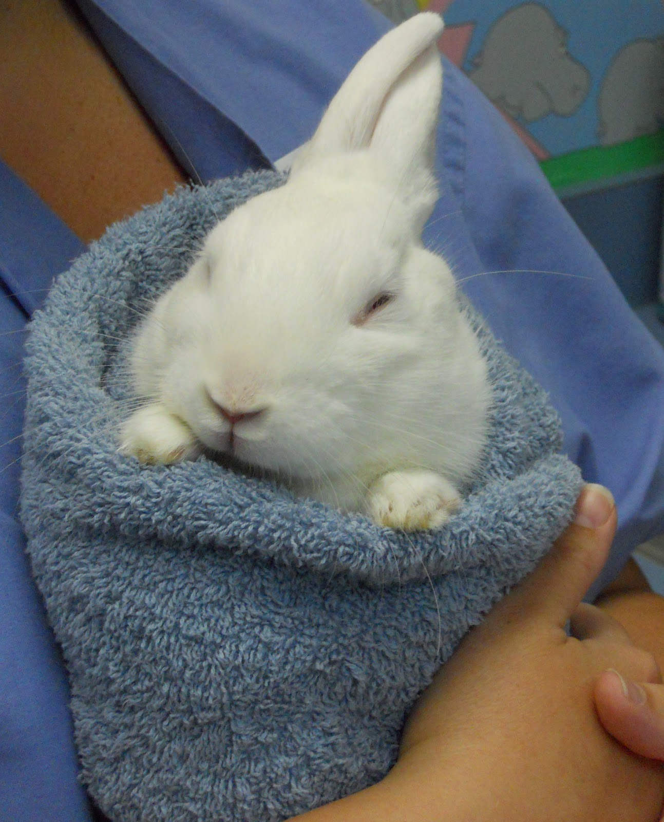 Bunny Care  The Bunny Burrito (with Alice, Er, Well, I Mean Theodore)