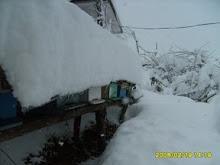 19 şub kar