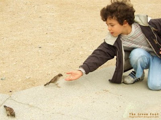 challenge foto ABBILDUNG boy feeding birds