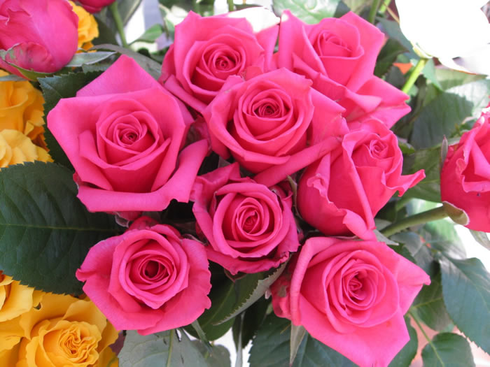 free high definition photos and wallpapers Roses flower, Roses photos,