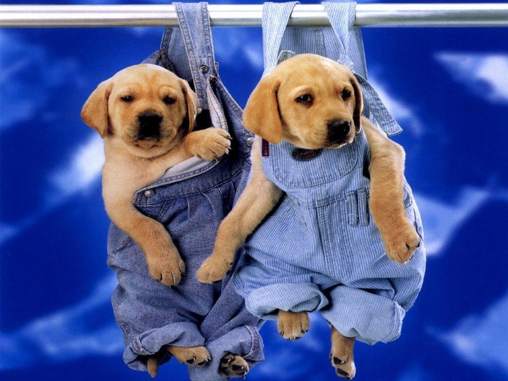 http://3.bp.blogspot.com/_EAViqbzwc_s/TKGUHjFbE1I/AAAAAAAABYE/SsR4REnoUz4/s1600/dog+%2810%29.jpg