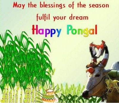 hd pongal 2011 wallpapers,