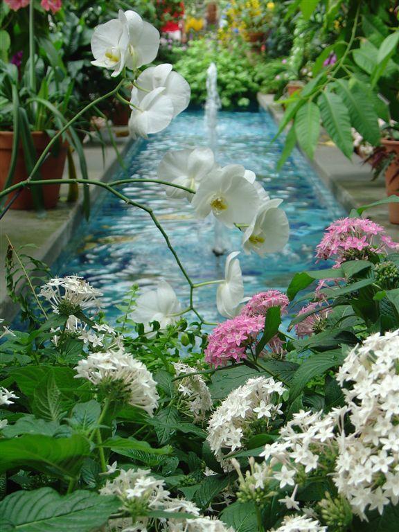 [garden5]