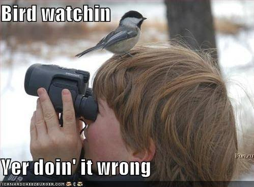 friday funny   bird watching kylie purtell   capturing life
