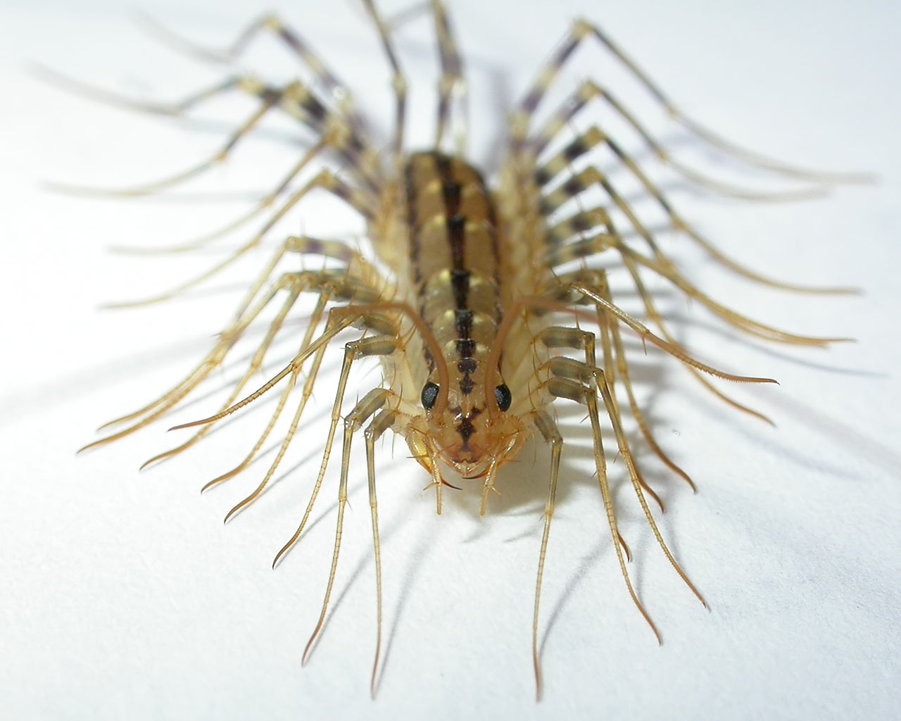 Dorm kitchen cleaning and pest prevention ariapluscat for How to get rid of centipedes in my bathroom