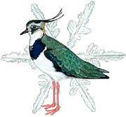 Atlas of Wintering Birds