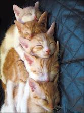 Todos Durmiendo....