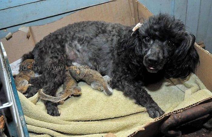 http://3.bp.blogspot.com/_EHi0bg7zYcQ/TKVVnb-aU4I/AAAAAAAAI2s/IvlJhrTrxiU/s1600/animal_adoptions_04.jpg