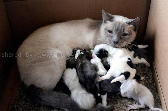 http://3.bp.blogspot.com/_EHi0bg7zYcQ/TKVVoCNXHXI/AAAAAAAAI20/xlweMXack0c/s1600/animal_adoptions_05.jpg