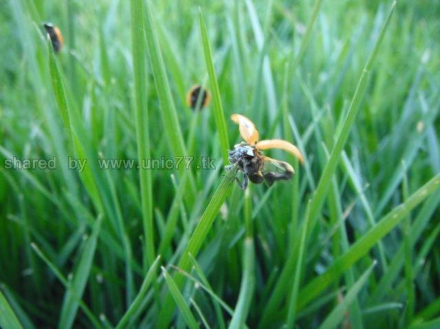 http://3.bp.blogspot.com/_EHi0bg7zYcQ/TLankjWIjaI/AAAAAAAANIU/i6Cb1pXiF8Y/s1600/these_funny_animals_515_640_23.jpg
