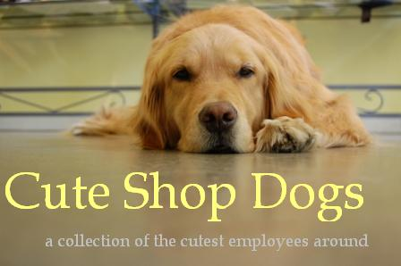 <center>Cute Shop Dogs</center>