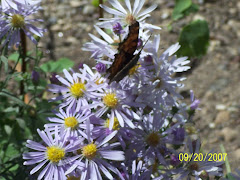 Jackson Hole, WY 9/2007